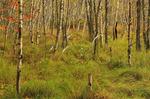 Jessup Path, Wild Gardens of Acadia, Acadia National Park, Maine, USA