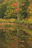 Jessup Path, The Tarn, Wild Gardens of Acadia, Acadia National Park, Maine, USA
