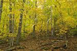 Frohock Mountain Trail, Camden, Maine, USA