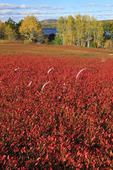 Blueberry Bald, Union, Maine, USA