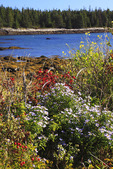 Lanes Island Nature Conservancy Preserve, Vinalhaven Island, Maine, USA