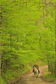 Horseback Riding, Bradley Fork Trail, Great Smoky Mountains National Park, North Carolina, USA