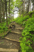 Near Icewater Spring Shelter, Charlie's Bunion Trail, Great Smoky Mountains National Park, North Carolina, Tennessee, USA