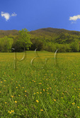 Meadow, Cades Cove, Great Smoky Mountains National Park, Tennessee, USA