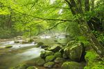 Porters Creek, Porters Creek Trail, Greenbrier Area, Great Smoky Mountains National Park, Tennessee, USA