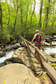 Footbridge Over Porters Creek, Porters Creek Trail, Greenbrier Area, Great Smoky Mountains National Park, Tennessee, USA