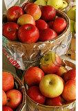 Ripe apples at a roadside market, Bridgeport, Pennsylvania
