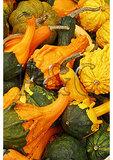 Gourds at a roadside market, Bridgeport, Pennsylvania
