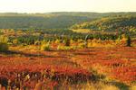 Beaver Dam Trail, Dolly Sods Wilderness, Hopeville, West Virginia, USA