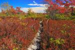 Harman Knob Trail, Dolly Sods Wilderness, Hopeville, West Virginia, USA