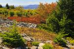 Canaan Valley, Harman Knob, Rocky Ridge Trail, Dolly Sods Wilderness, Hopeville, West Virginia, USA