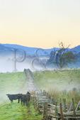Dawn, Western Highland County, Hightown, Virginia, USA