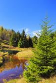 Left Fork Red Creek, Blackbird Trail, Dolly Sods Wilderness, Hopeville, West Virginia, USA
