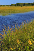 Scarborough Marsh.Eastern Trail.Scarborough, Maine, USA