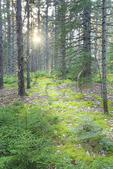 Hiking Trail, Porter Preserve, Boothbay, Maine, USA