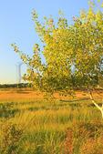 Sunset, Scarborough Marsh.Eastern Trail.Scarborough, Maine, USA