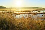 Sunrise, Scarborough Marsh.Eastern Trail.Scarborough, Maine, USA