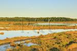 Moonrise, Scarborough Marsh.Eastern Trail.Scarborough, Maine, USA
