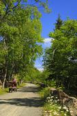 Jordan - Bubble Ponds Carriage Loop Carriage Road Near Deer Brook Bridge, Acadia National Park, Maine, USA