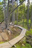 Ship Harbor Trail, Acadia National Park, Maine, USA