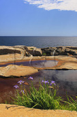 Schoodic Point, Schoodic Peninsula, Acadia National Park, Maine, USA