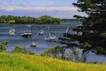 Friendship Harbor, Maine, USA
