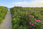 Path to Beach, Parsons, Beach, Kennebunkport, Maine, USA