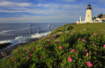 Wild Roses, Pemaquid Point, Lighthouse, Pemaquid Lighthouse Park, New Harbor, Maine, USA