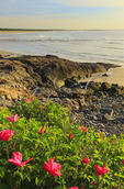 Sunrise, Marginal Way, Ogunquit, Maine, USA