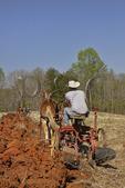 Team of Mules Pulling Side Hill Plow, Bud Whitten Plow Day, VDHMA,  Dillwyn, Virginia, USA