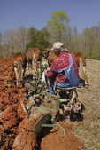 Team of Mules Plowing, Bud Whitten Plow Day, VDHMA,  Dillwyn, Virginia, USA