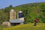 Horse in Field, Ottobine, Shenandoah Valley of Virginia, USA