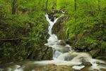 Hogcamp Branch, Dark Hollow - Rose River Falls Trail, Shenandoah National Park, Virginia, USA