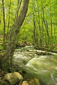Rose River, Shenandoah National Park, Virginia, USA