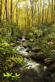 Jakes Creek, Meigs Mountain Trail, Elkmont, Great Smoky Mountains National Park, Tennessee, USA