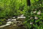 Chimney Tops Trail, Greenbrier Area, Great Smoky Mountains National Park, Tennessee, USA