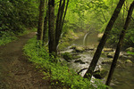 Little River Trail, Elkmont, Great Smoky Mountains National Park, Tennessee, USA
