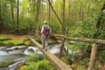 Forge Creek, Gregory Ridge Trail, Great Smoky Mountains National Park, Tennessee, USA
