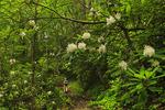 Husky Gap Trail, Great Smoky Mountains National Park, Tennessee, USA