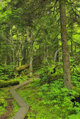 Spruce Nature Trail, , Great Smoky Mountains National Park, Tennessee, USA