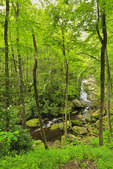 Cascade Beside Middle Prong Trail, Tremont, Great Smoky Mountains National Park, Tennessee, USA