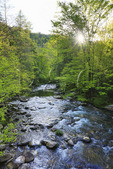 Middle Prong, Tremont, Great Smoky Mountains National Park, Tennessee, USA