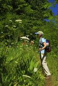 Blackberry Lilly along Appalachian Trail, Sawmill Ridge, , Shenandoah National Park, Virginia, USA