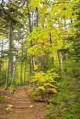 Asticou and Jordan Pond Trail, Acadia National Park, Maine, USA