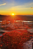 Sunset, Cadillac Mountain, Acadia National Park, Maine, USA