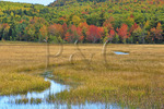 Gilmore Meadow, Carriage Road Near Post 11, Acadia National Park, Mount Desert Island, Maine, USA