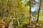 Boardwalk,  Jordan Pond Shore Trail, Acadia National Park, Maine, USA