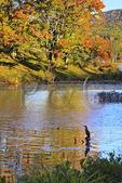Cormorant, Little Long Pond, Acadia National Park, Mount Desert Island, Maine, USA