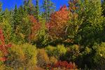 Schoodic Woods Bike Path, Schoodic Peninsula, Acadia National Park, Maine, USA