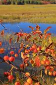 Scarborough Marsh, Eastern Trail, Scarborough, Maine, USA